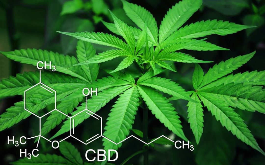 CBD and How It Can Help the Cancer Patients
