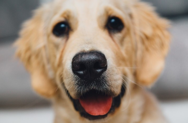 What To Look Out For When Choosing A Vet For Your Pet
