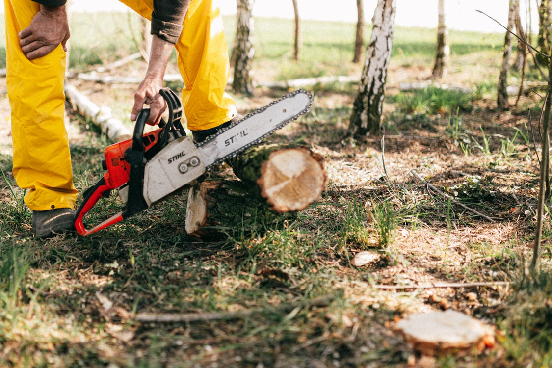 A Closer Look at What Tree Care Experts Do and Why You Should Contact Them
